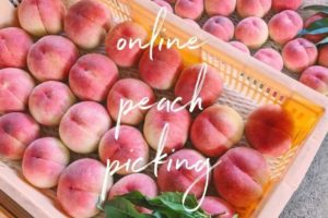Online Peach Picking!! Amazing!New experience!